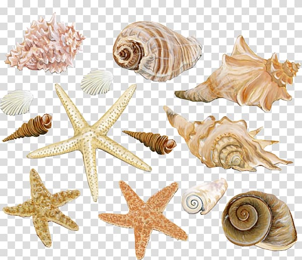 Shell clipart shape. Assorted and color seashells