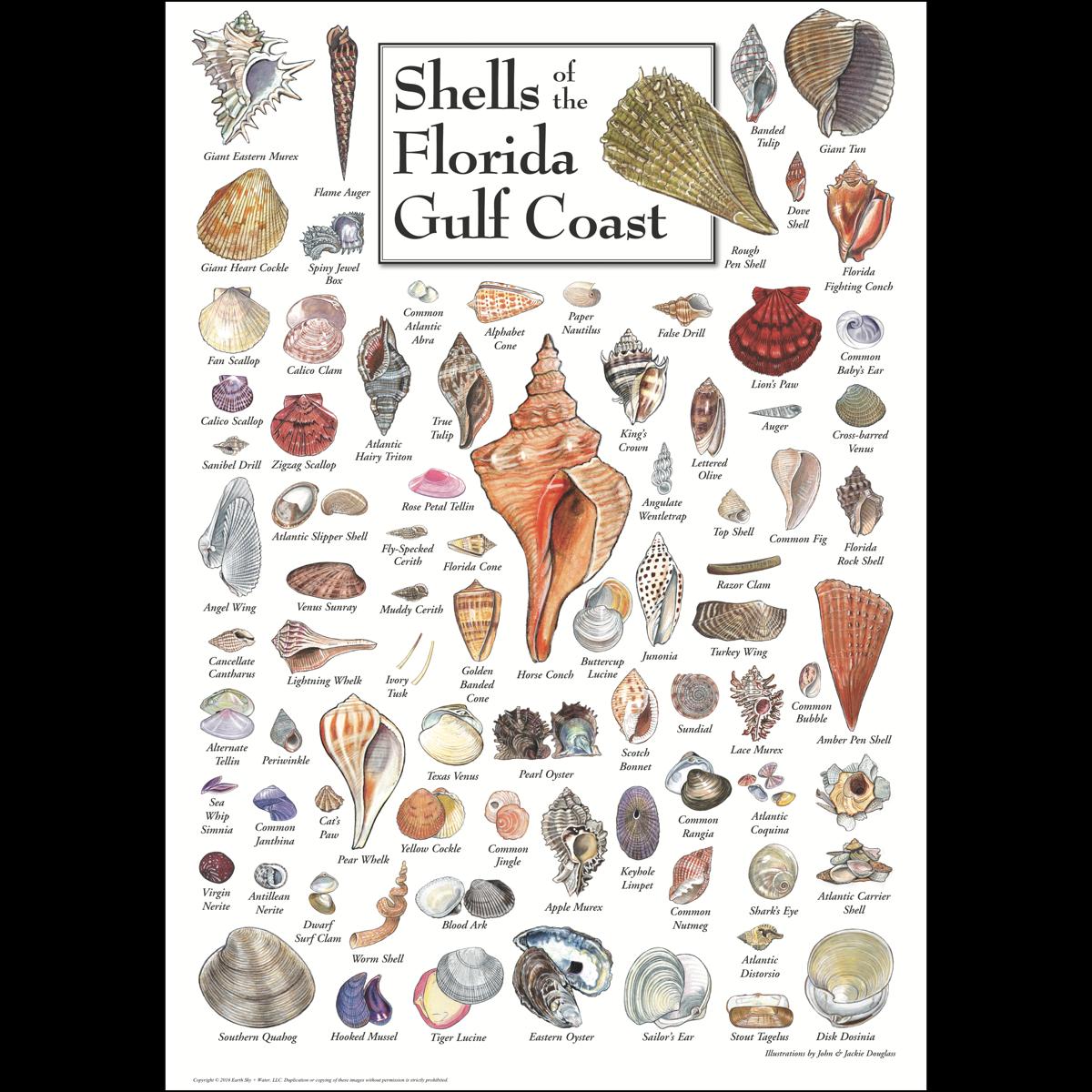 Seashell posters romeo landinez. Shell clipart triton