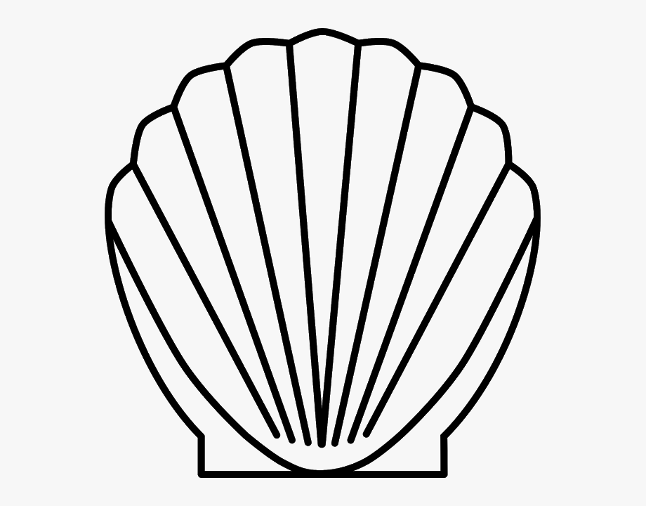 Drawing scallop sea line. Shell clipart lineart