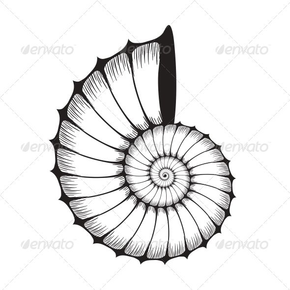 Sea clam organic objects. Shell clipart tattoo