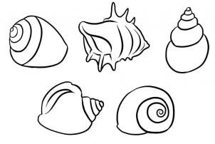 Shell clipart easy. How to draw shells