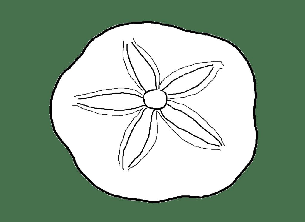 Shells coloring page democraciaejustica. Seashells clipart traceable