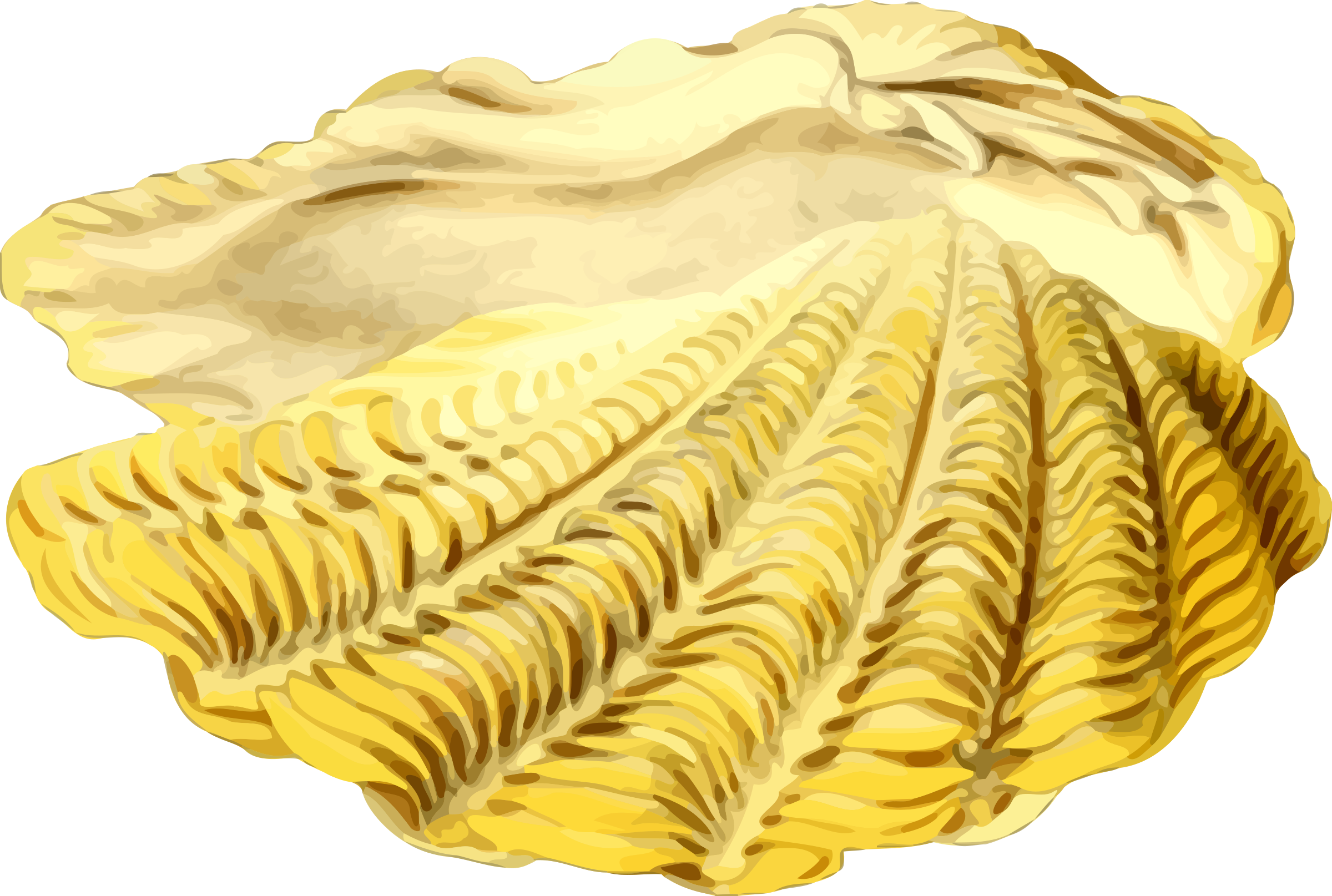 Big image png. Shell clipart sea side