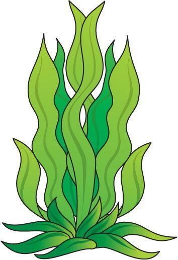 How to draw seaweed. Clipart fish plant