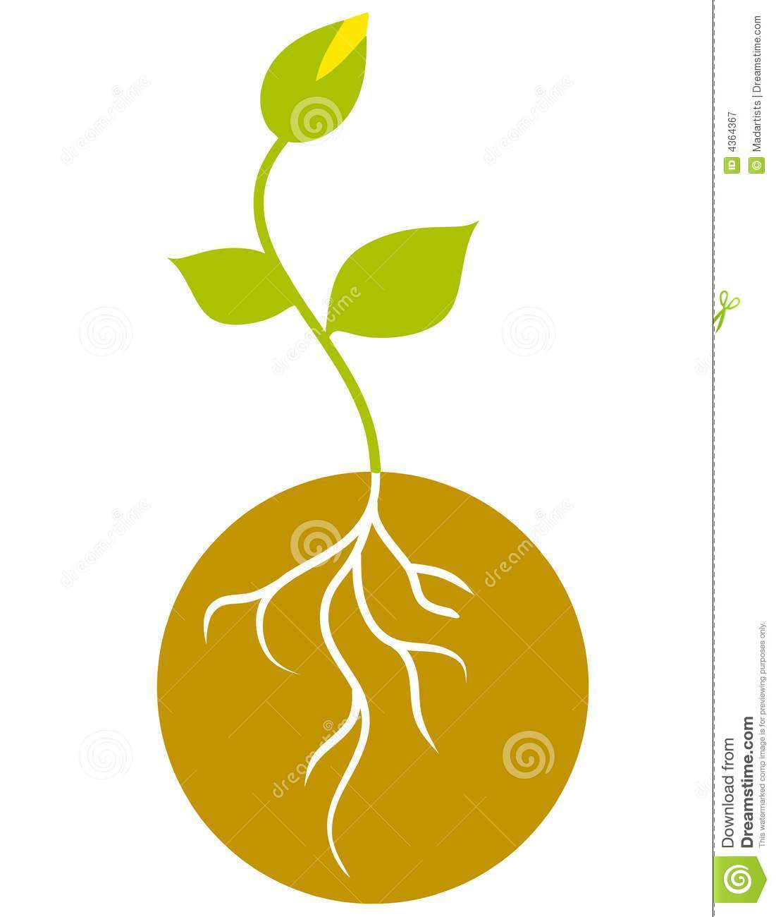 Seedling clipart. And roots