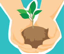 Seedling clipart. Search results for clip
