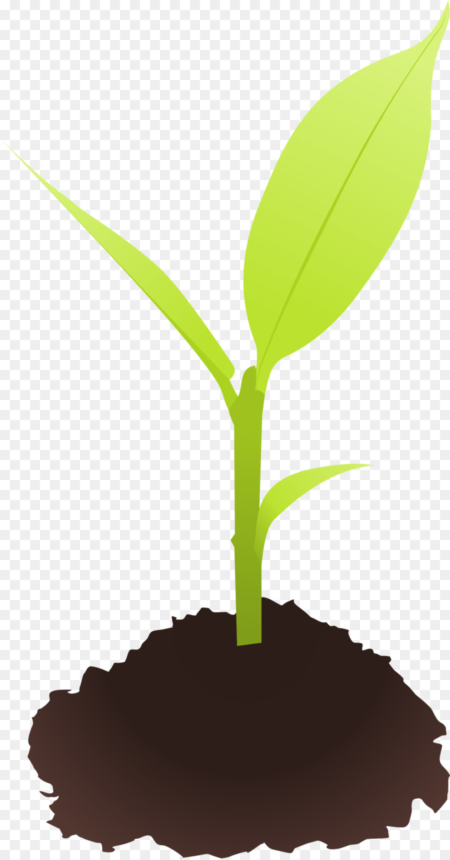 Sprouting clip art plant. Seedling clipart
