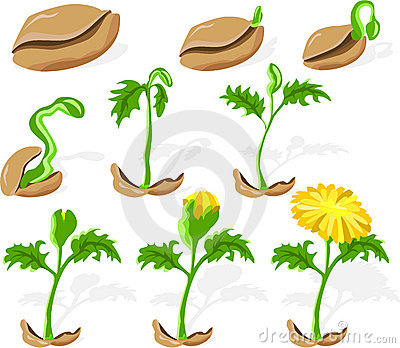 Seedling clipart clip art.  seed clipartlook