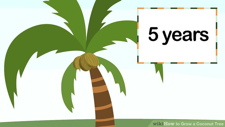 How to grow a. Seedling clipart coconut seed