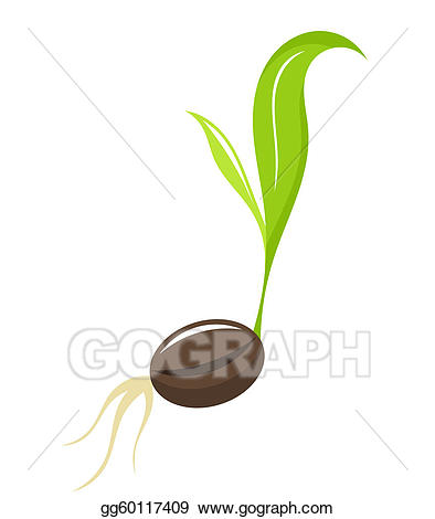Vector newborn plant . Seedling clipart coconut seed