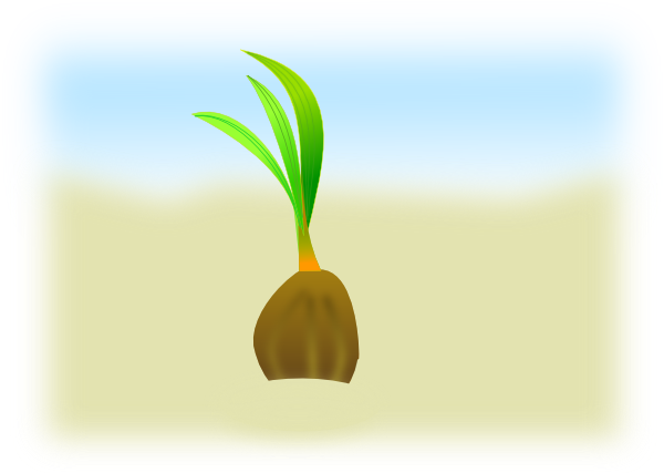 Seedling clipart coconut seed. Clip art at clker