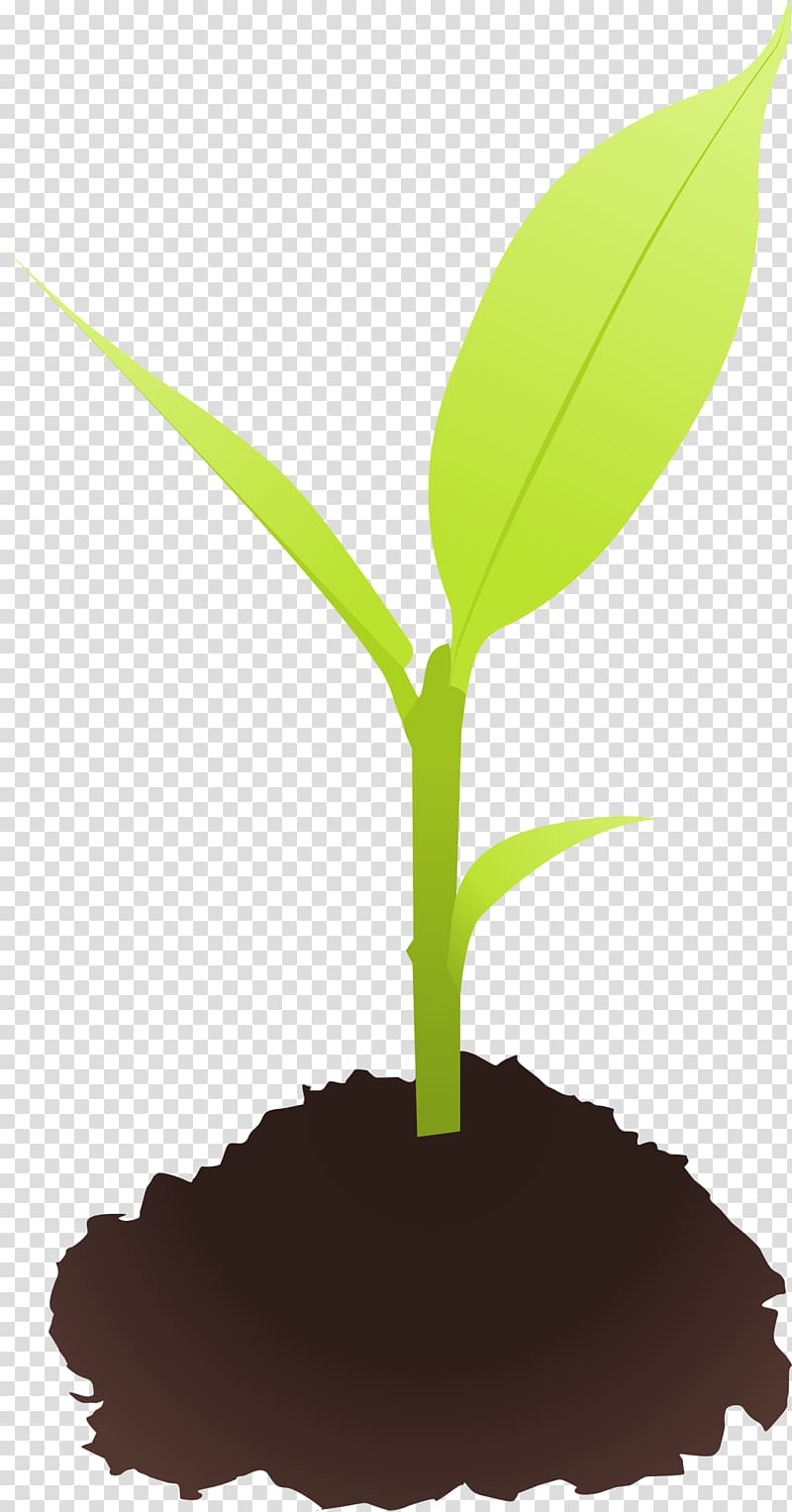 Sprouting plant transparent background. Seedling clipart coconut seed