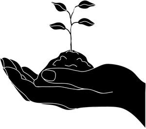 Seedling clipart garden soil. Free download best on