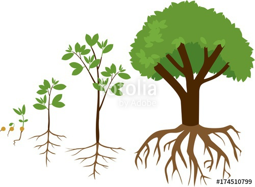 Sequential stages of plant. Seedling clipart growth rate