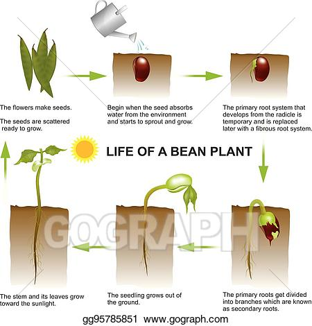 Clip art vector life. Seedling clipart land plant