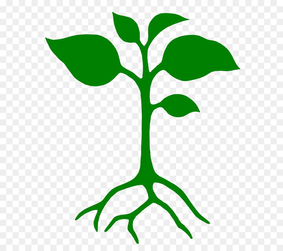 Seedling clipart leaf stem. Green background