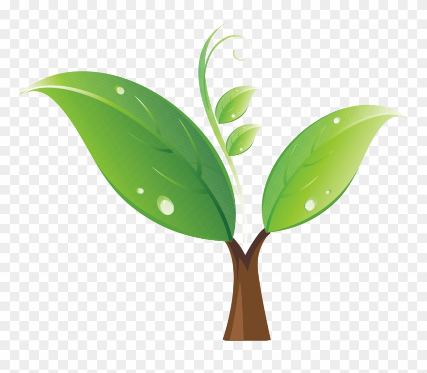 Seedling clipart plant face. Tree clip art portable