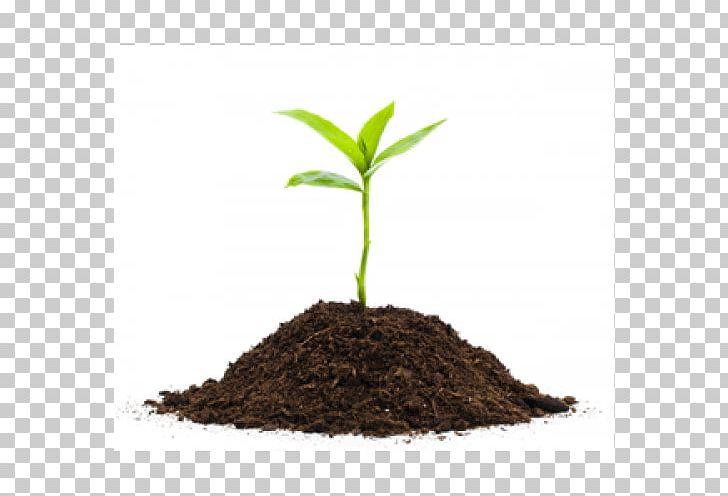 Seedling clipart plant face. Plants soil png compost