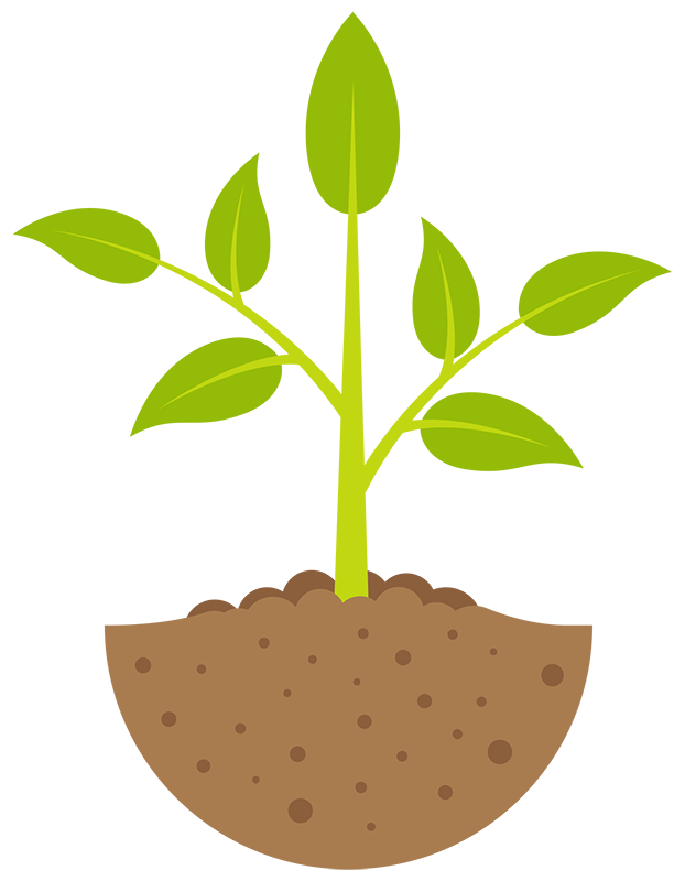 seedling clipart plant stage