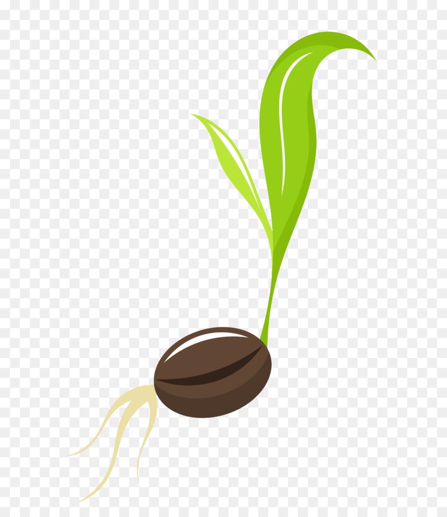 Flower line leaf plants. Seedling clipart plantae
