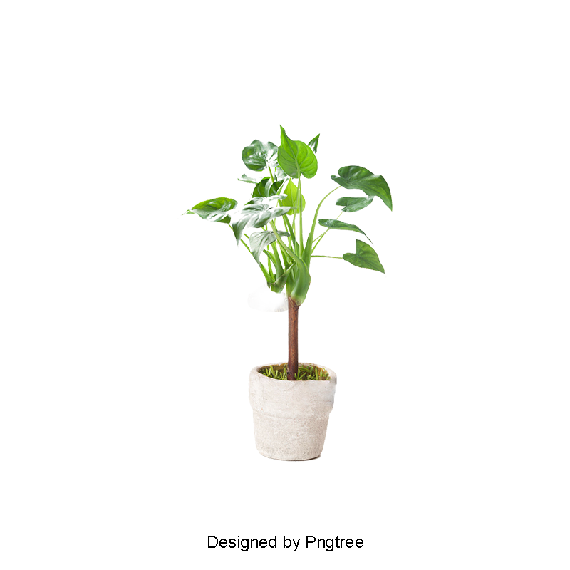 Seedling clipart potted plant. Gardening flower pot png