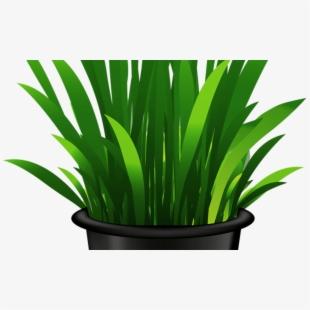 Plants transparent background . Seedling clipart potted plant