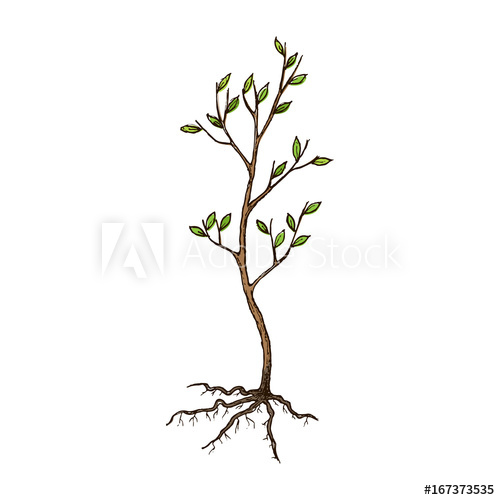 Seedling clipart root. Tree with roots sketch