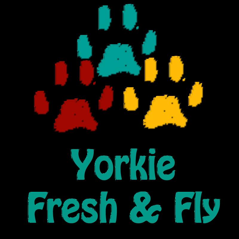 Yorkie la moringa seeds. Shampoo clipart line