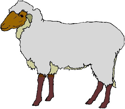 Panda free images lamb. Sheep clipart