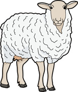 Sheep clipart. Free clip art pictures