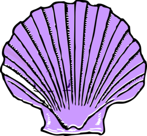 Purple . Shell clipart