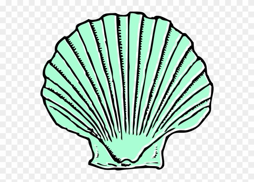 Seashells clipart green. Aqua seashell clip art