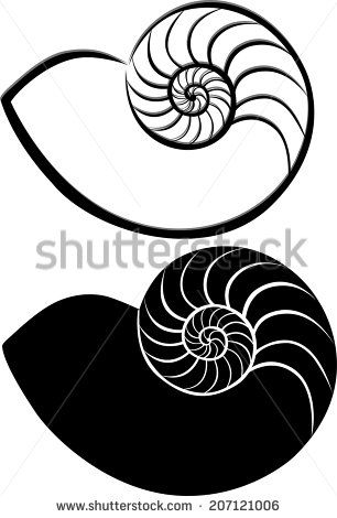 Shell clipart ammonite. Drawing google search tattoosa