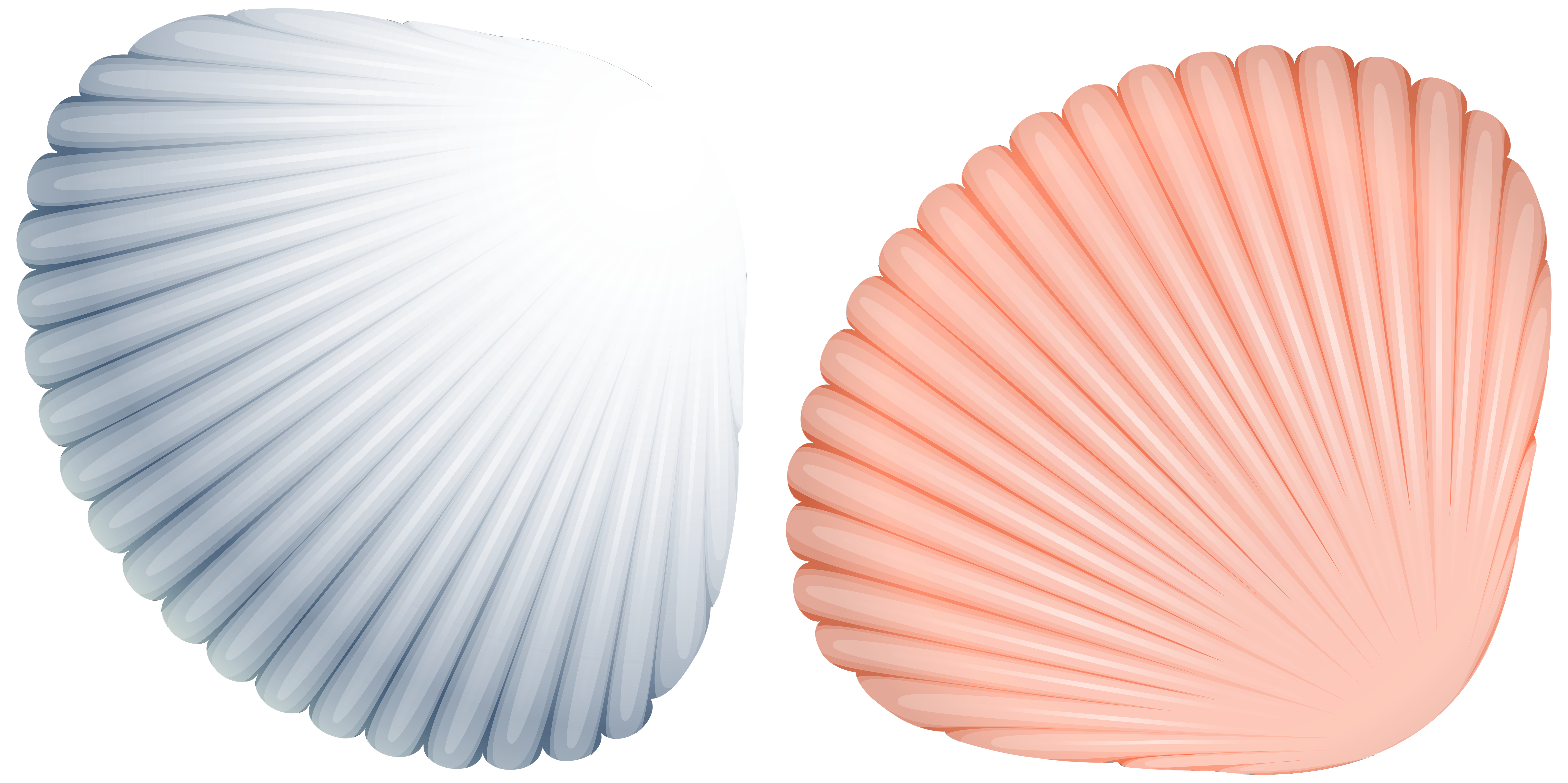 Shells png image gallery. Shell clipart blue sea