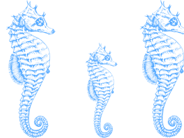 Seahorse free on dumielauxepices. Shell clipart border