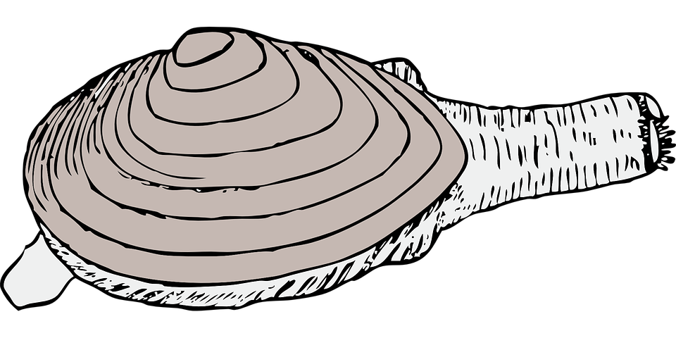 Of a cartoon happy. Shell clipart clam sketch