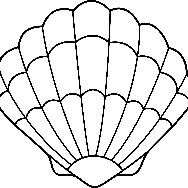 Shell clipart clam sketch. Jokingart com