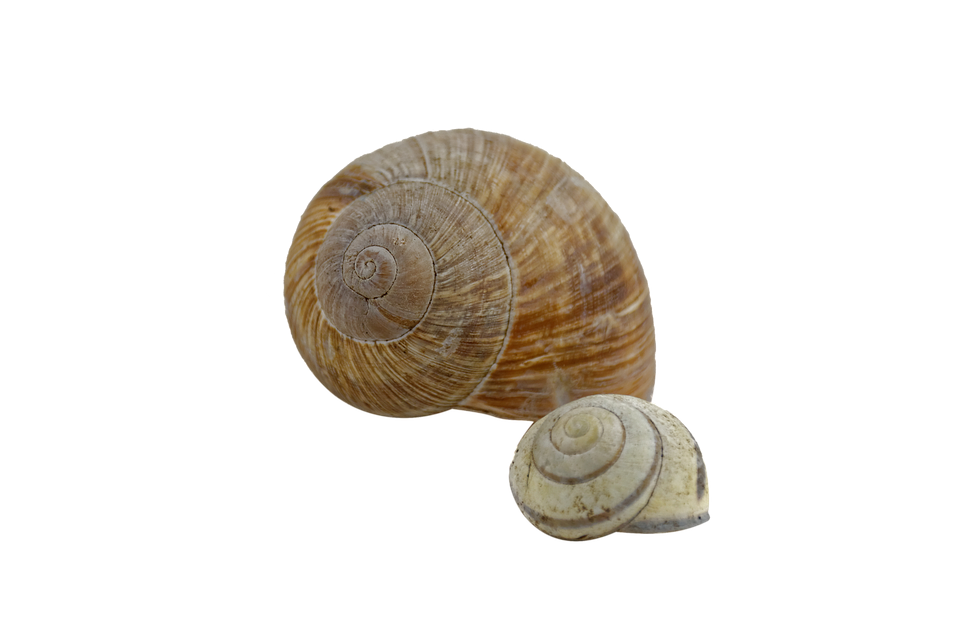 Shell clipart clear. Hd png transparent images