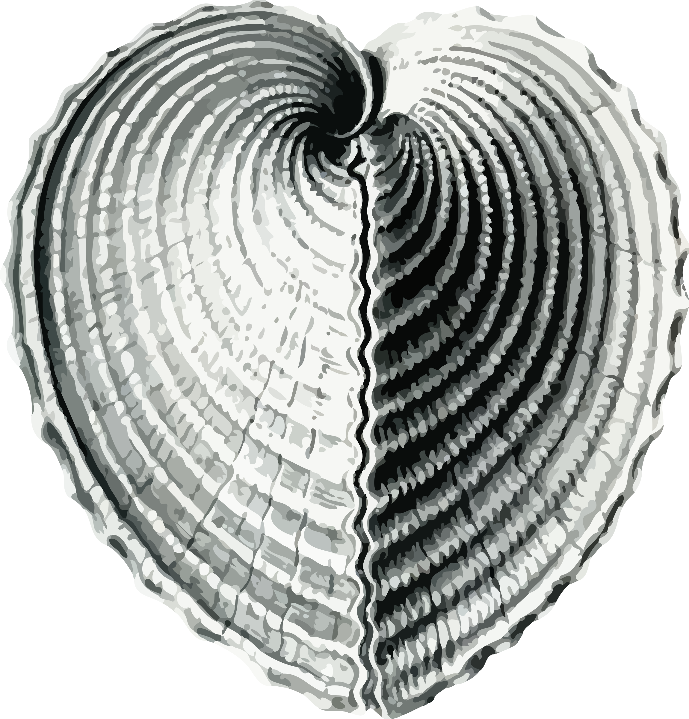 Bivalve heart big image. Shell clipart cockle drawing