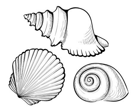 Shell clipart cockle drawing. Drawn x free clip