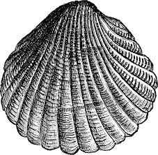 Image result for pen. Shell clipart cockle drawing
