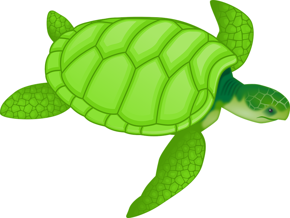 Shell clipart sea turtle