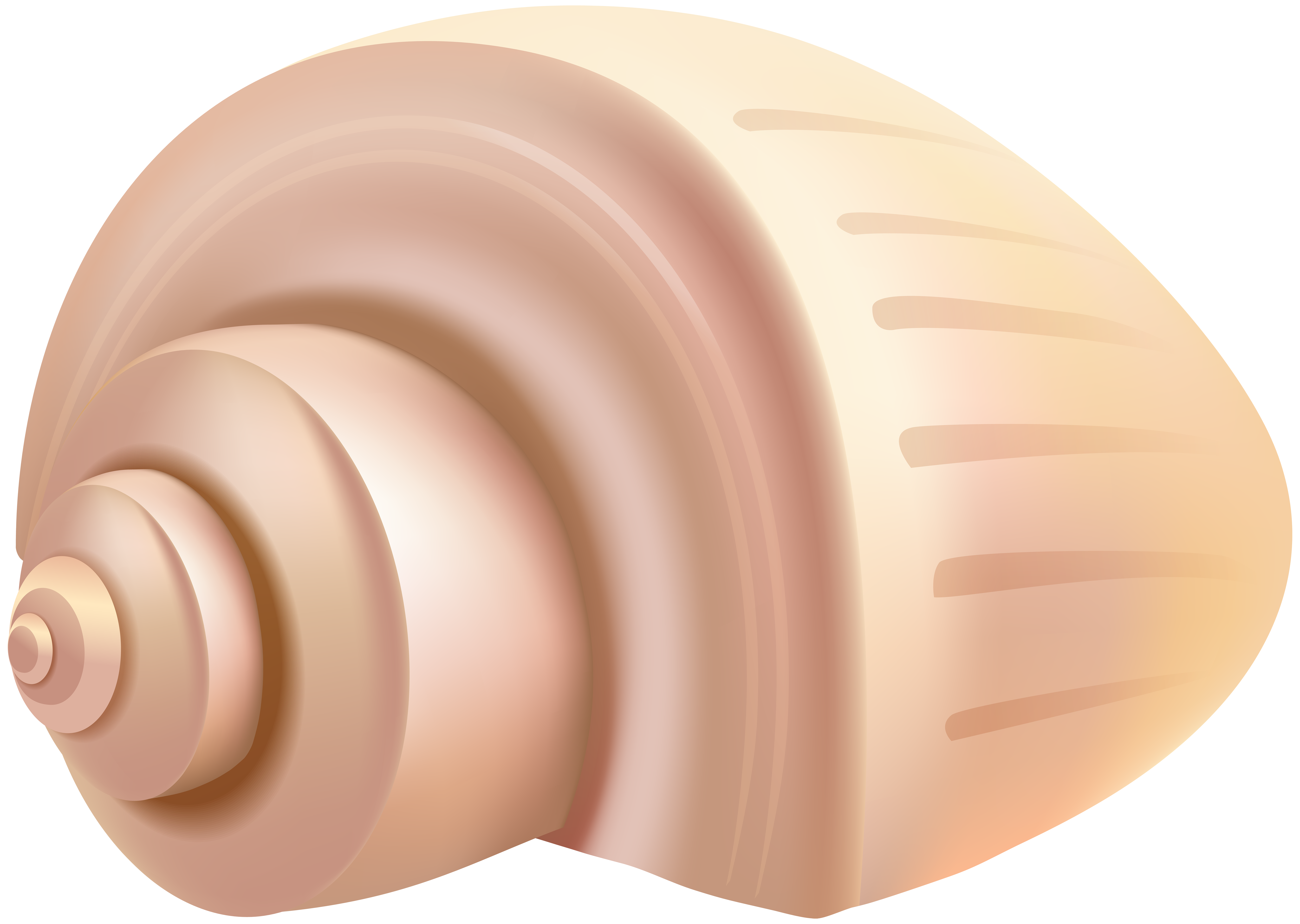 Shell clipart conch. Png clip art gallery