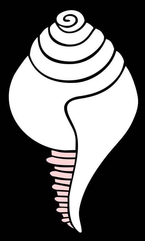 Shell clipart conch. File white symbol svg