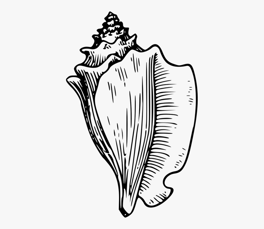 Clip art black and. Shell clipart conch