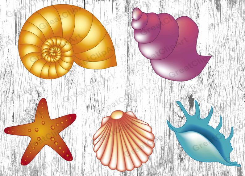 Shell clipart coral clipart, Shell coral Transparent FREE ...