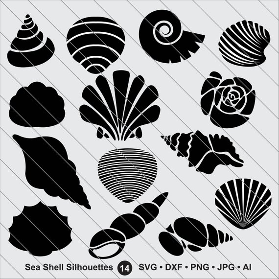 Shell clipart design. Sea silhouettes svg bundle