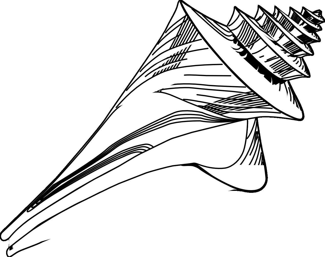 shell clipart design