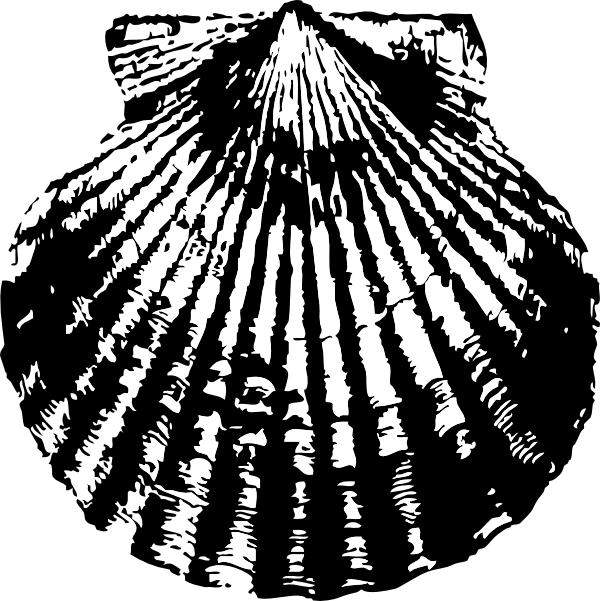 Shell clipart drawing. Scallop clip art library