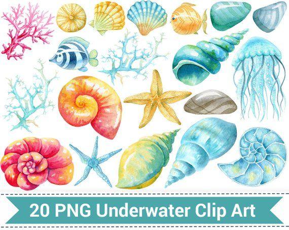 Nautical watercolor underwater clip. Shell clipart fish